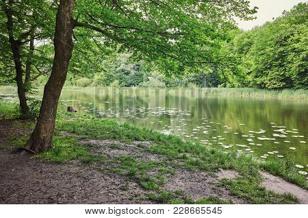 Forest. Green Tree In The Wood. Nature Ourdoor Environment. Landscape With Sun, Foliage, Pond, Lake.
