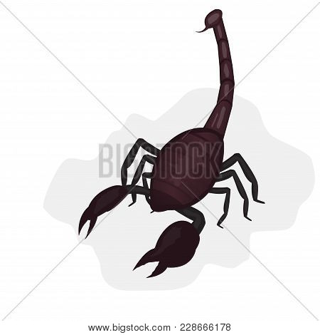 Drawn Dark Scorpion On A Light Background