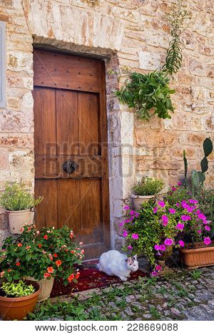 Historic Buildings Of Of Spello, Medieval City (perugia, Umbria, Italy). Door And Cat