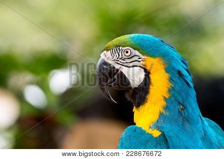 Close Up Of Blue Macaw Grabbing On Timer; Blue And Gold Parrot With Copy Space