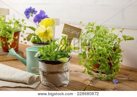 Gardening Tools, Watering Can, Seeds, Plants With Sign Hello Spring On Vintage Wooden Table. Spring