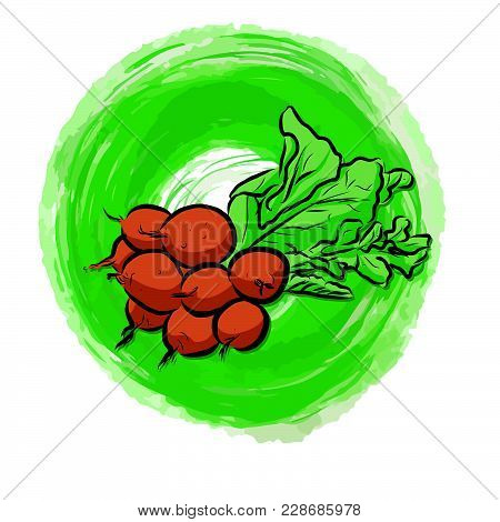 Radishes Painted Background. Beautiful Hand Drawn Vector Sketch. Colorful Elements For Social Media