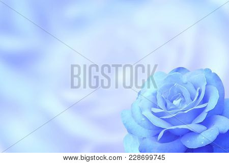Blurred background with rose of blue color. Copy space for your text. Mock up template. Can be used for wallpaper, wedding card, web page banner