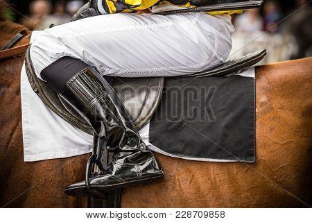 Race horse with leg of jockey, close-up.
