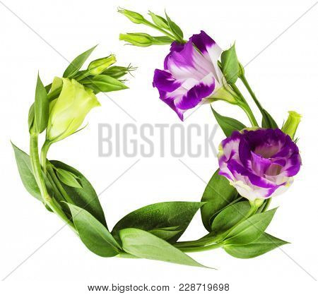 Floral Greeting Card with Blooming Eustoma. Isolated on white background