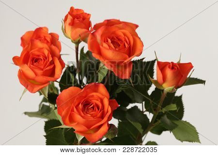 Red roses flower bouquet on gray background