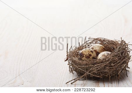 Quail eggs in a real nest on a woode table on a white background with copy space.