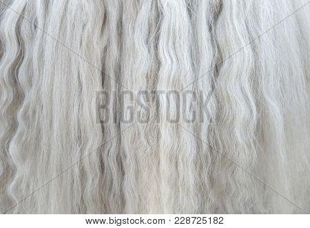 Long white mane of horse close up. Animal background.