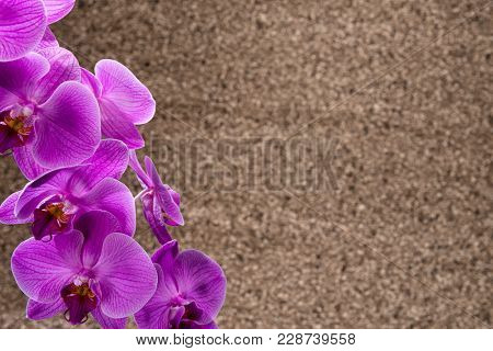 Purple Orchid with Copy Space