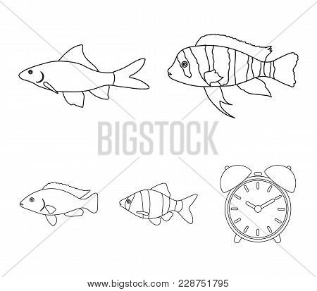Botia, Clown, Piranha, Cichlid, Hummingbird, Guppy, Fish Set Collection Icons In Outline Style Vecto