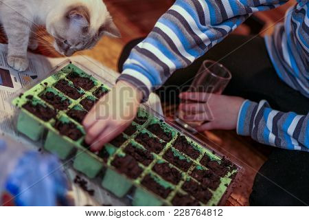 The Boy Plants Plant Seeds In Disposable Cups. Preparation Of Seedlings. Seeding In The Spring.