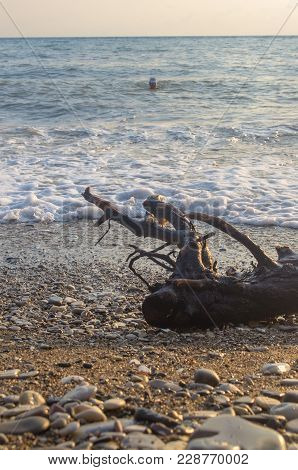 Driftwood, Washed Up By The Sea On A Pebble Beach, Transparent Waves With Foam, On A Warm Summer Day