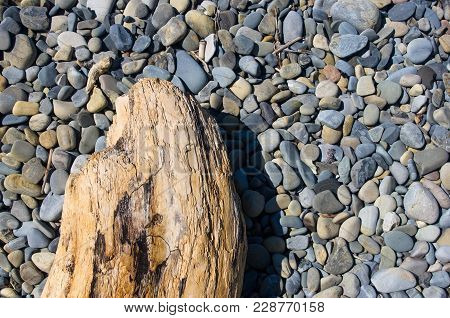 Driftwood, Washed Up By The Sea On A Pebble Beach On A Warm Summer Day