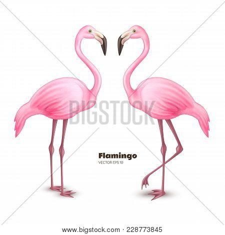 Realistic 3d Flamingo. Pink Vector Tropical Exotic Bird Standing Set. Holiday Travel Vacation Beach