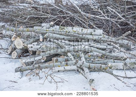 Lumber, Lying In The Snow, A Log Felled In Winter For Firewood