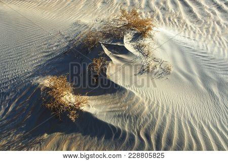 Waves Of Sand And Plants In The Desert Of Rub' Al Khali