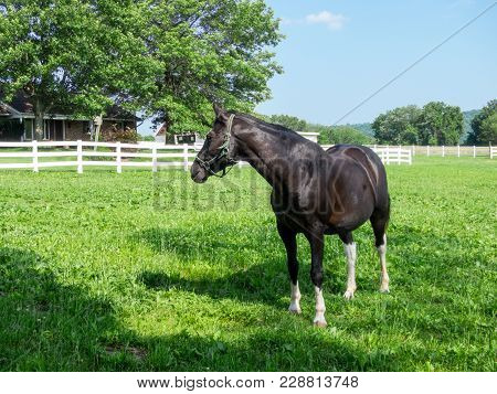 Horse In The Pasture
