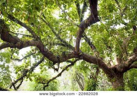 Huge limb of a tree in thick lush jungle poster