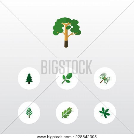 Icon Flat Bio Set Of Oaken, Spruce Leaves, Hickory And Other  Objects. Also Includes Leaf, Tree, Lea
