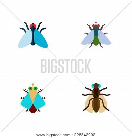 Icon Flat Housefly Set Of Buzz, Gnat, Housefly And Other  Objects. Also Includes Fly, Tiny, Housefly