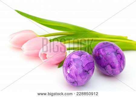 Pink Tulips With Purple Easter Eggs On White Background