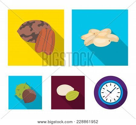 Pecan, Pine Nut, Pumpkin Seeds, Chestnut.different Kinds Of Nuts Set Collection Icons In Flat Style