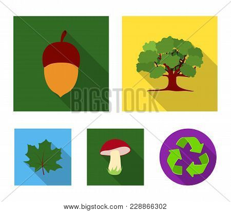 Oak, Acorn, Edible Mushroom, Maple Leaf.forest Set Collection Icons In Flat Style Vector Symbol Stoc