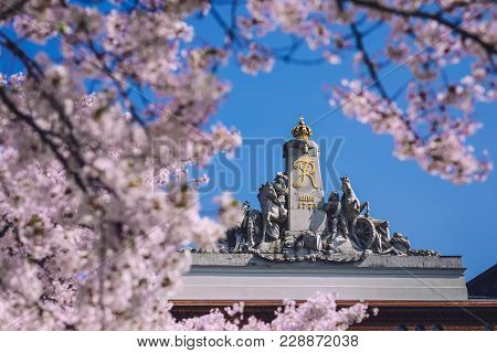 April, 9th, 2017 - Potsdam, Brandenburg, Germany. Blossoming Cherry Tree In Potsdam. Bloom Sakura An