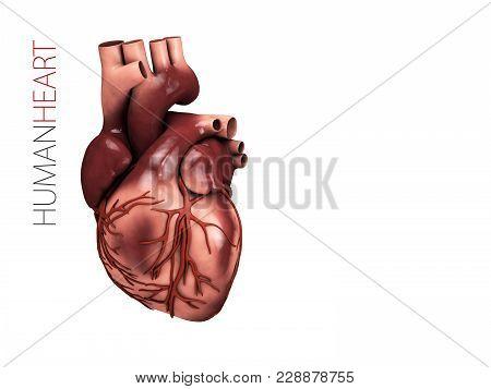 Human Heart Anatomy. Organs Symbol. 3d Illustration Isolated On White Background.