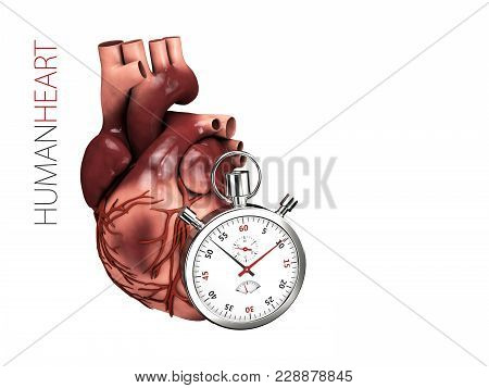 Human Heart Anatomy With Stopwatch. Organs Symbol. 3d Illustration Isolated On White Background.