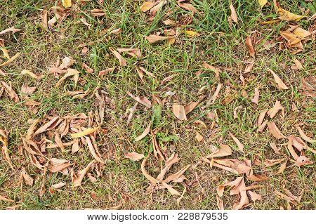 Dry Yellow Autumn Leaves. Dark Green Grass.
