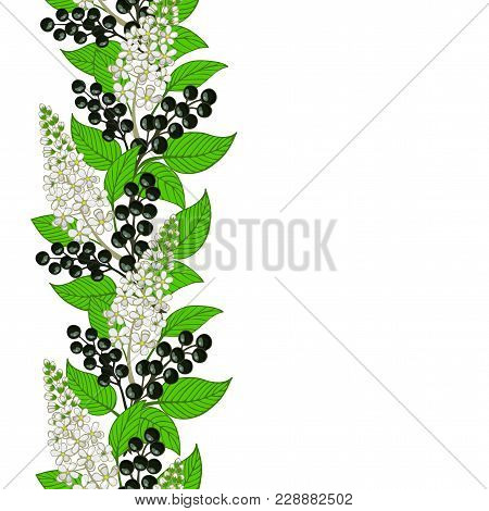 Seamless Bird Cherry Ornament. Floral Pattern. Vector