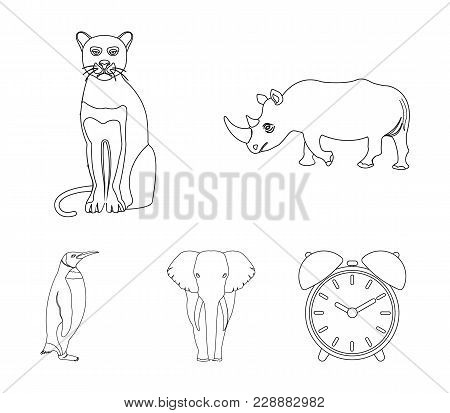 Black Rhinoceros, Panther Wild Cat, African Animal Elephant, Imperial Penguin. Wild Animals Set Coll