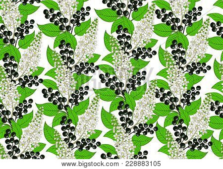 Seamless Bird Cherry Pattern. Berry And Floral Background. Vector