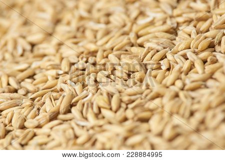 Raw Porridge. Neutral Light Background. Grains Of Cereals.