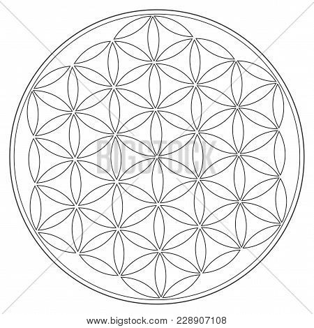 Sacred Geometry Vector Symbol: Flower Of Life, Also Known As The Pattern Of Creation. Sacred Seed An