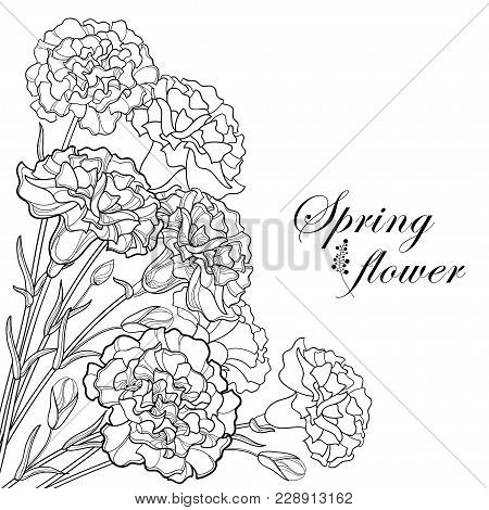 Vector Corner Bouquet With Outline Black Carnation Or Clove Flower, Bud And Leaf Isolated On White B