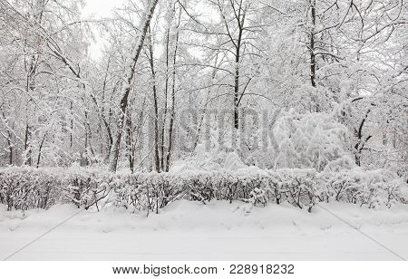 Bad Weather Concept. Snowfall In The Park, Winter Weather Scene, Snow Covered Trees Landscape