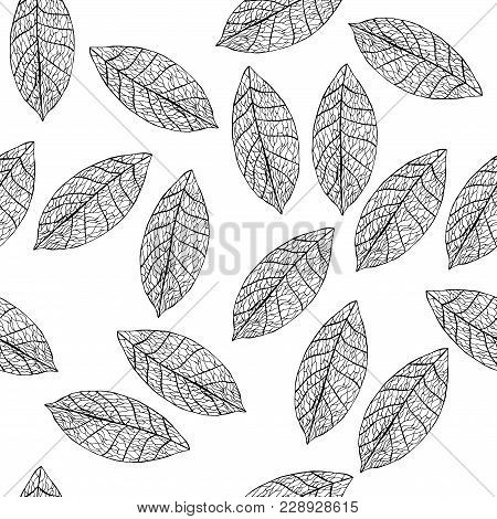 Vector Leaves On White Field. Uncolored Botany Illustration.