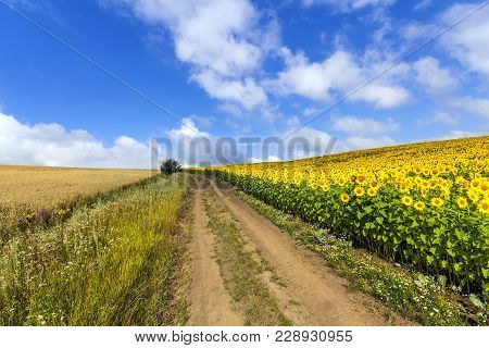 Landscape With Dirt Road Between Meadow Early In The Spring. Agriculture, Fields And Pastures. Natur