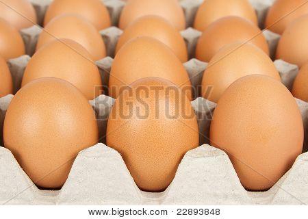 Background Eggs
