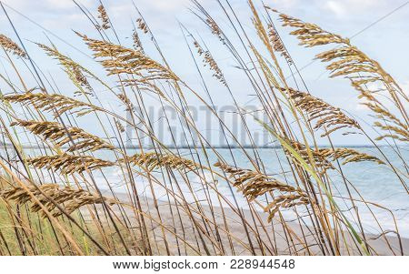 An Abstract Image Of Of The Beach. Tall Green Grass Grows On The Dunes At The Beach. This Image Focu