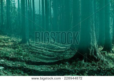 Fairy Forest In Fog. Fall Woods. Enchanted Autumn Forest In Fog In The Morning. Old Tree. Landscape