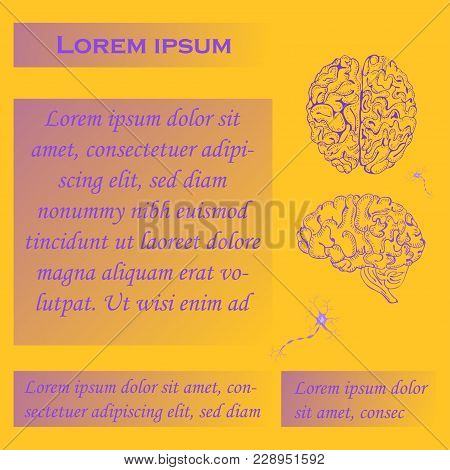 Poster For Seminars Or Workshops With Four Gradient Blocks For Text, Hand Drawn Brain And Neurons. H