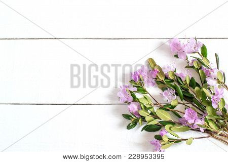 Delicate Bouquet Of Rhododendron Dauricum On White Background