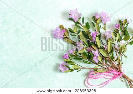 Delicate Bouquet Of Rhododendron Dauricum On Light Green Background
