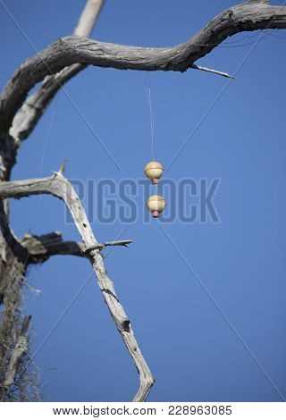 Fishing Bobbers In A Tree