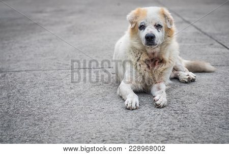 Stray Mixed Breed Dogs Sitting On Concrete Floor Old Age And Poor Health Condition With Vignette Eff