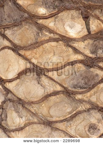pattern texture on a palm surface in brown tones poster
