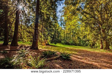 Sun Rays From The Bright Sun Shining Between The Trees Of The Green Forest With The Fern Bushes Gree